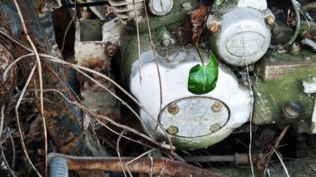 废弃三轮摩托车上的绿叶